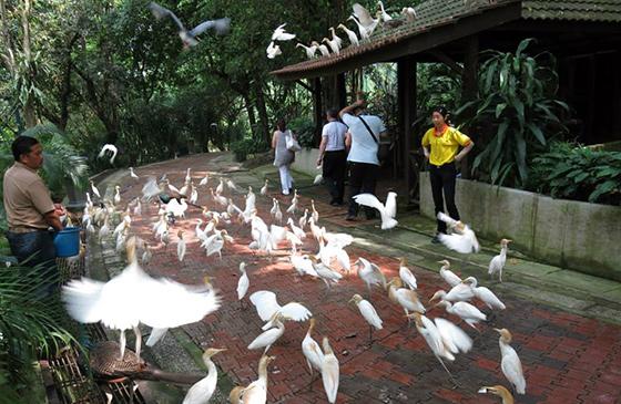 kids-travels-kl-bird-park