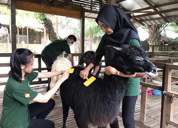 Farm In The City Kuala Lumpur