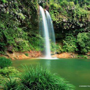 Sarawak Borneo Miri Lambir Hills National Park