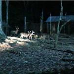 melaka-zoo-night-safari-11