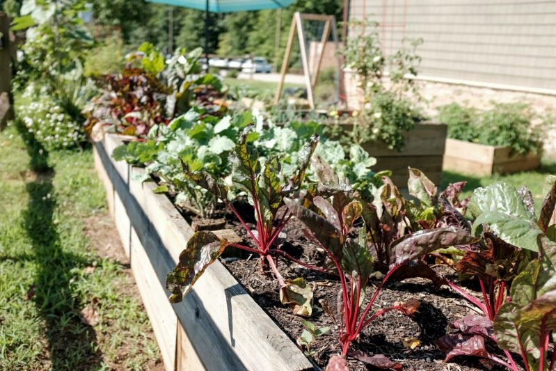 Raised bed gardens are a great way to grow flowers or vegetables. With the ability to control soil makeup and moisture levels, it's almost impossible to go wrong when planting in raised bed gardens. With just a few steps you can be on your way to gardening like a pro with these beds. #gardning #raisedbedgardening #homeschoolgardening