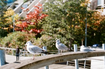 Seagulls along the harbor