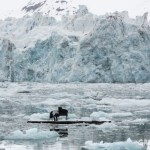 THE STORY OF THE PIANIST ON THE ARCTIC OCEAN