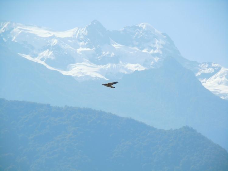 A condor in flight, somewhere along the Choquequirao trail in Peru.