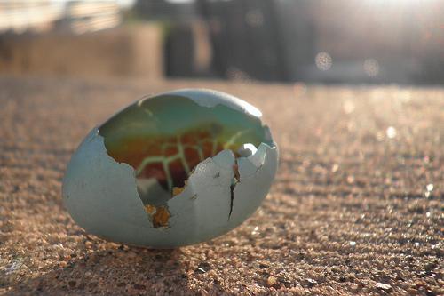 Ever feel like you're walking on cultural egg shells?