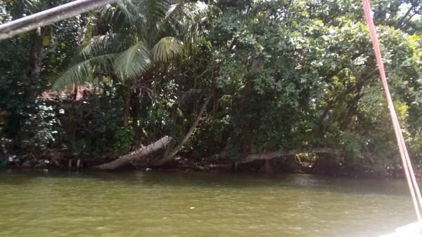 Cruising on Madu River