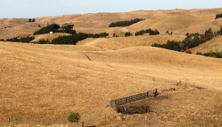 NEW ZEALAND: Drought!