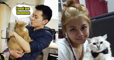 msian-cat-owners-share-with-us-some-ridiculous-things-they-do-with-their-pets-world-of-buzz M'sian Gets His Pet Cats Castrated, Celebrates By Giving Pulut & Rendang To His Colleagues
