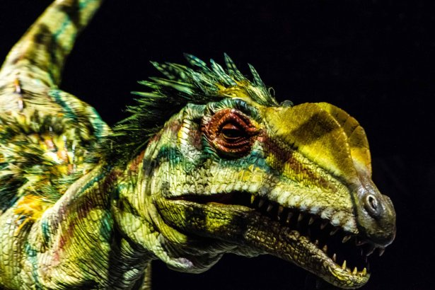 Lilliensternus Watch 18 LIFE-SIZE Dinosaurs Come to Live in KL This August 2019!