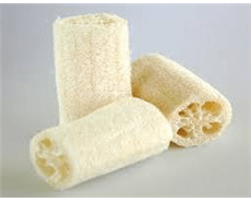 Loofahs, bacteria creates power-generating microbial fuel cell