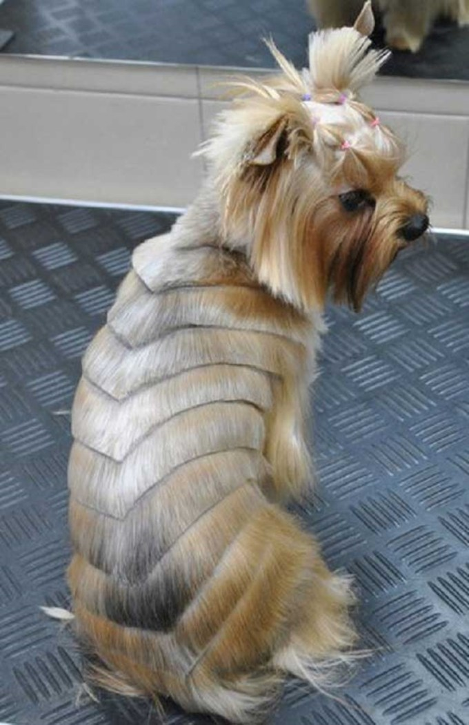 80+ adorable yorkie haircuts for your puppy
