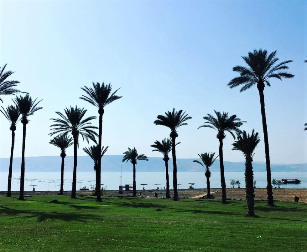 Palm trees in front of the Sea of Galilee. Israel