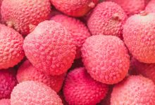 Why children die eating litchi?
