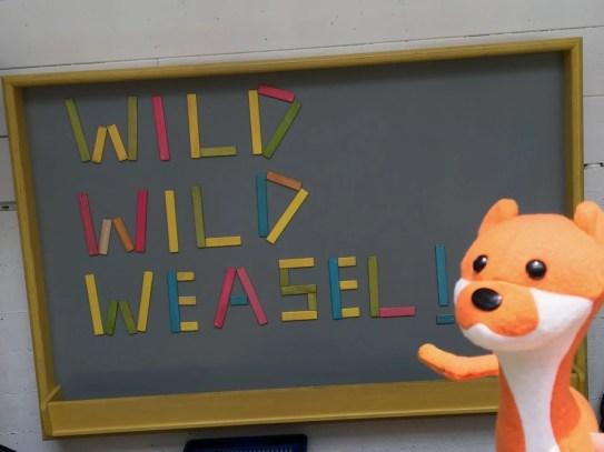 Plush weasel drops by!