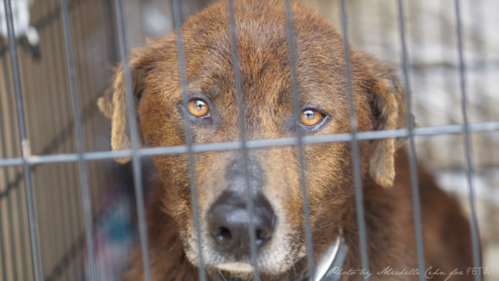 Help Protect Backyard Dogs Left Outside 24-Hours a Day