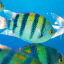 What a Fish Knows: An interview with Dr. Jonathan Balcombe