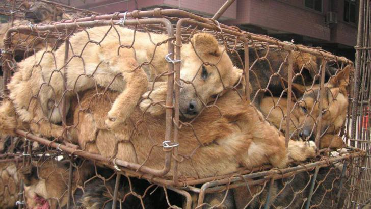 Killing Dogs for Meat Is Now Illegal in South Korea