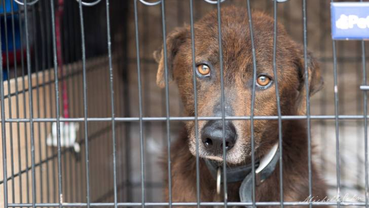 Hurricane Harvey's Displaced Animals Need You!