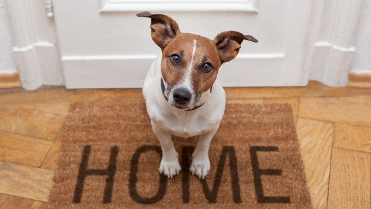 Are Animal Products Sneaking Into Your Home?