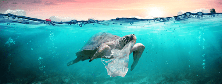 Prevent Single-Use Plastic Packaging Waste
