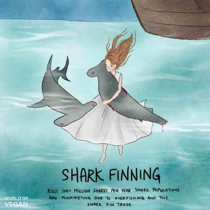 Shark Finning Art World of Vegan Illustration Girl Underwater Hugging a Shark