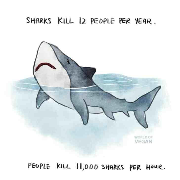 World of Vegan Shark Art Number Sharks Killed vs Humans Killed Per Year