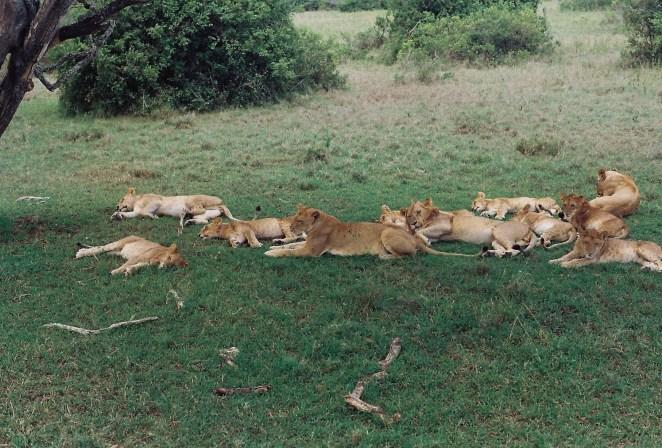 Kenya Safari 4