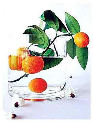 Kumquats_avuillon