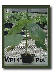 """WPI 4"""" Pot"""