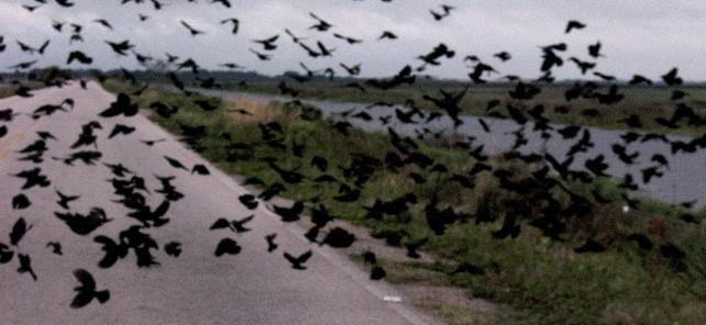Brazil Birds Wetlands