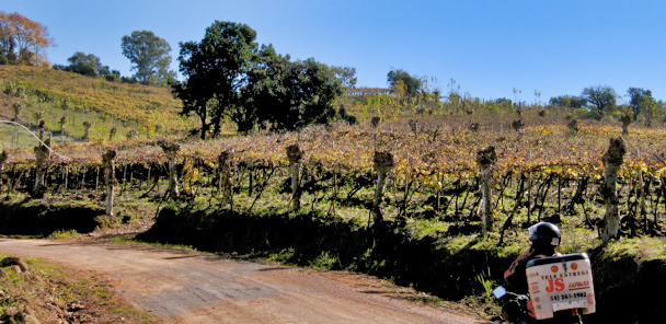 Brazil Wine Road Motoboy