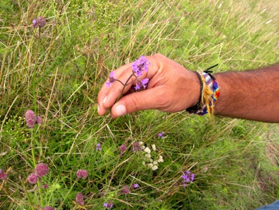 Campo Flower