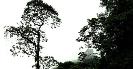 Costarica Cloudforest