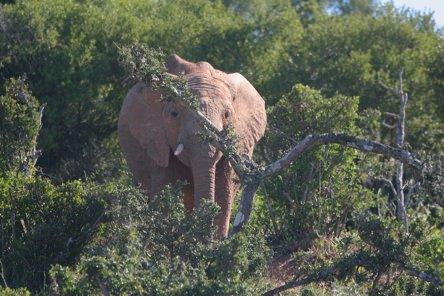 Elephant Looks-1