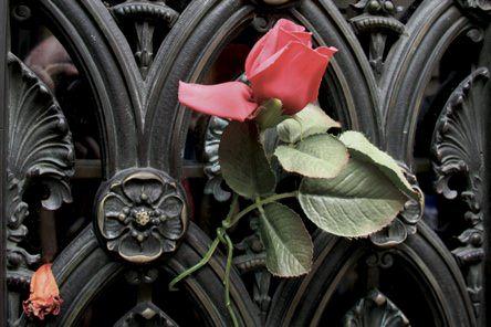 Evas Rose Recoleta