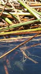 Island Reeds Water