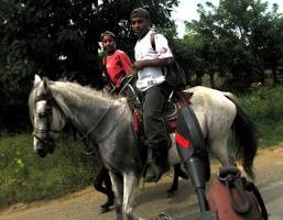 Nic Horse Boys