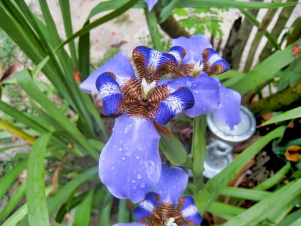 Trancoso Flower5