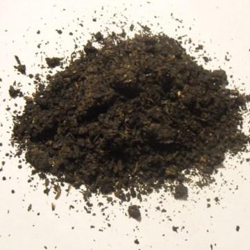 Canavalia Maritima (Baybean) 10X Resin Extract