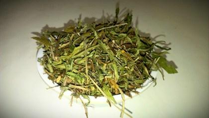 Heimia Salicifolia (Sinicuichi / Sun Opener) Wildcrafted Mexican Leaf