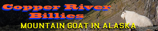 mountain goat, mountain goat hunting, mountain goat hunts, goat hunting