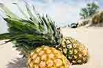 Pineapples in the sand (courtesy of Pixabay.com)