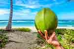 Seychelles Top 10 Exports