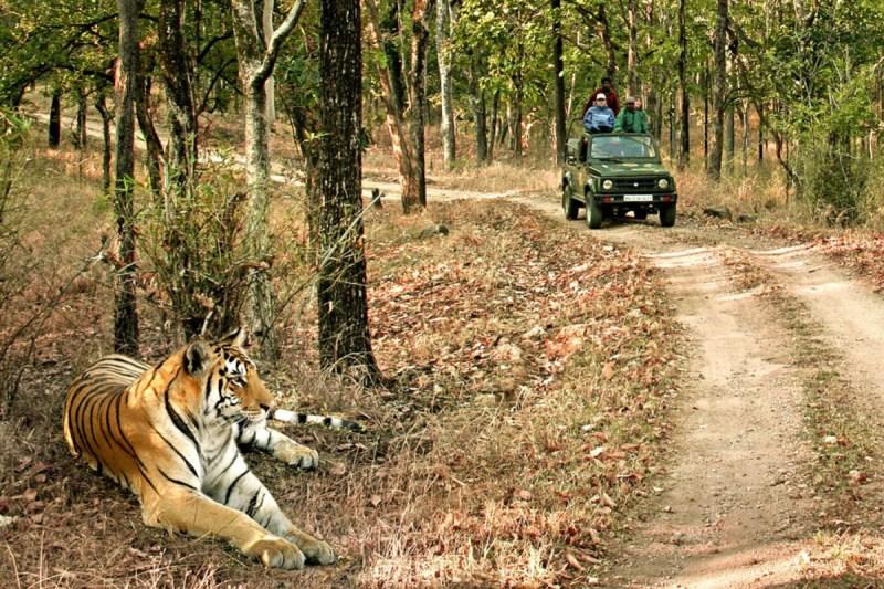 Bandhavgarh Tiger Reserve: