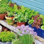 How to Plant a Vegetable Garden in Your Home