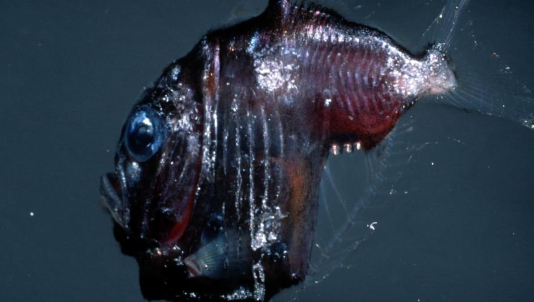 terrifying sea creatures