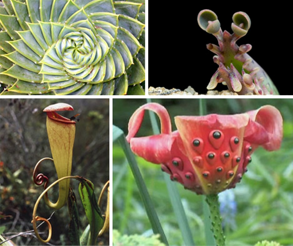 10 Most Strangest Plants You Can Find In The World