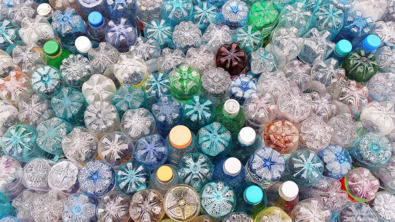 Plastic Eating Microbes
