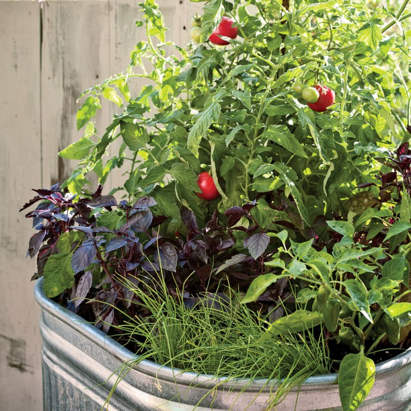 Grow vegetables with One-pot vegetable planter