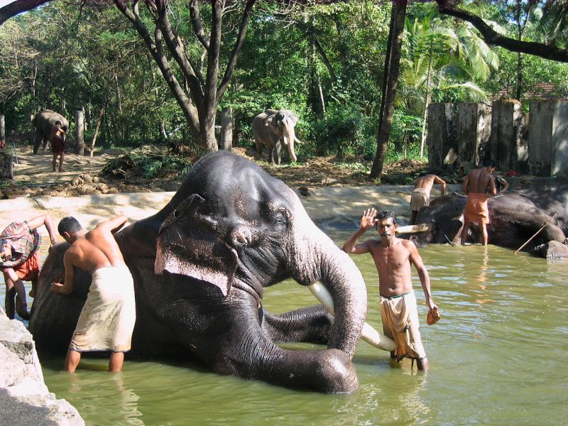 crazy facts about India, spa for elephants at Punnathoor Cotta Elephant Yard Rejuvenation Centre